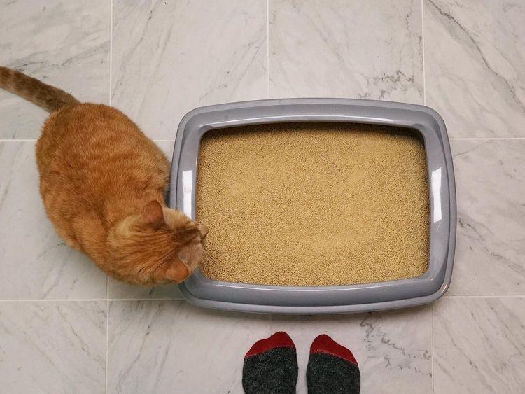 World's Best Cat Litter, Clumping Litter Formula for Multiple Cats
