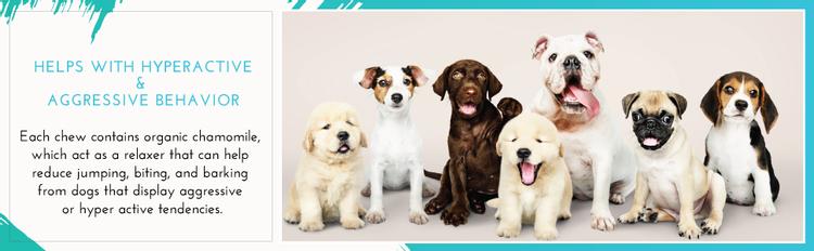 cbd dog treats dog anxiety relief adaptil thunder shirts