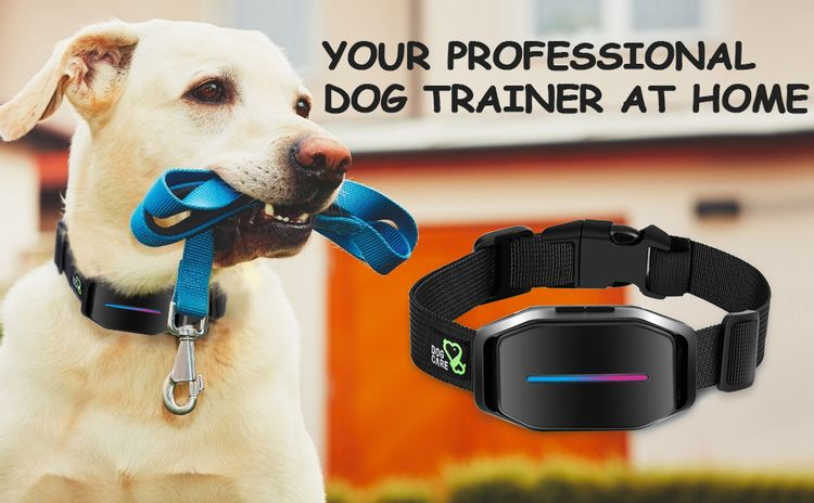 bark collar dog bark collar bark collar for dogs shock collar dog shock collar shock collar for dogs