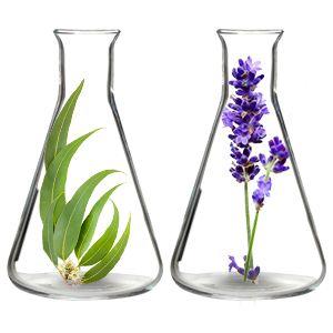 eucalyptus and lavender essential oil