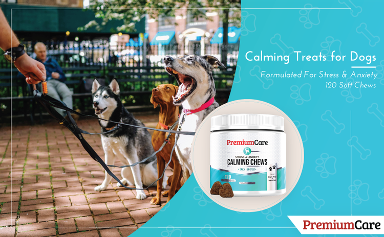 Calming Treats for dogs