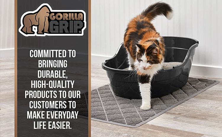 branding image cat exiting box