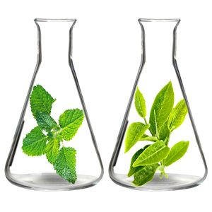 peppermint and tea tree essential oils