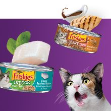 Adult cat with cans of Friskies wet cat food with real seafood, chicken and gravy