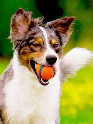 dog ball launcher, tennis ball launcher, dog tennis balls, dog balls indestructible,