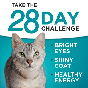 Take the twenty eight day challenge for bright eyes, a shiny coat and healthy energy.