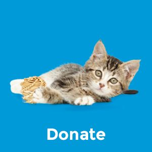 cat shelter;paw pints;cat litter clumping;clump and seal;clump cat litter;clumping cat litter