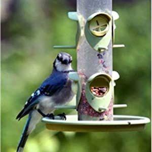 eastern regional, bird food, bird seed, wagners